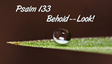 Psalm 133 - Behold--Look!